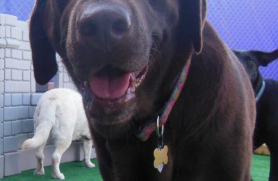 Chaka Is Our September Dog Of The Month!