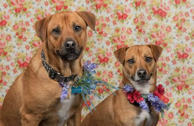 Congratulations, Booker and Bailey, our May Dogs of the Month!!
