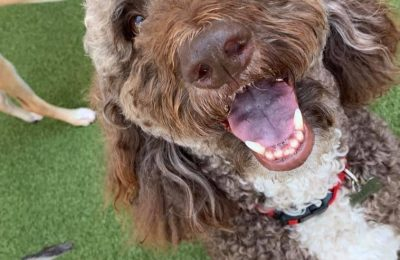 Congratulations, Wallace, our August Dog of the Month!