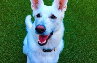 Congratulation, Birdie, Our April Dog of the Month!