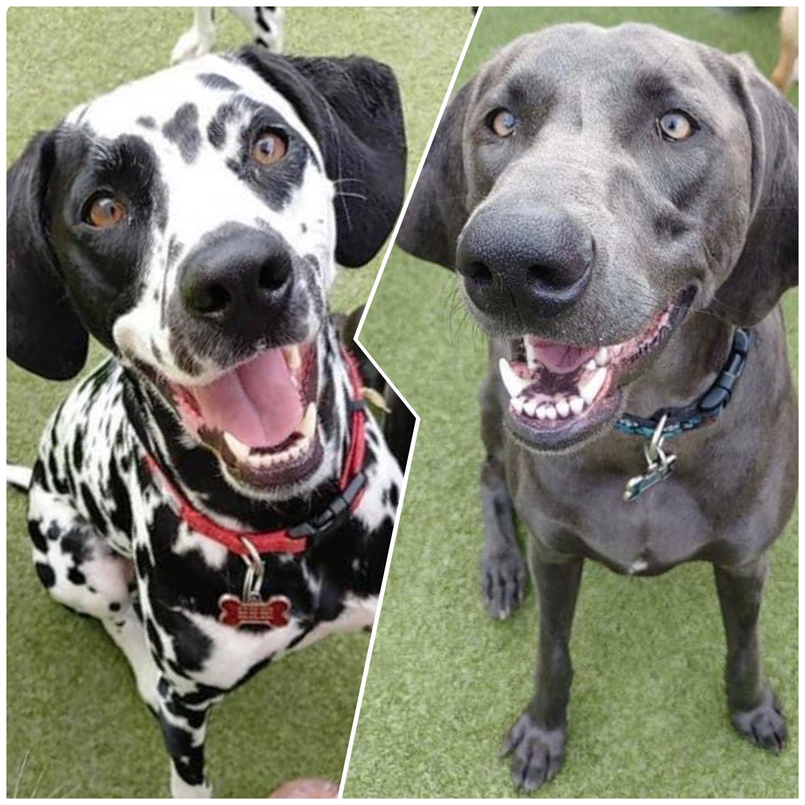 Congratulations, Stella & Luna, Our May Dogs of the Month!