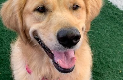 Congratulations, Bailey, Our August Dog of the Month!