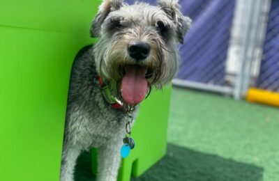 Congratulations, Liam, Our September Dog of the Month!