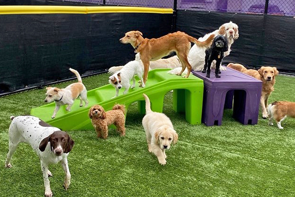 Central Bark Rochester Doggy Daycare