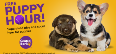 Free Puppy Hour at Central Bark Orlando East