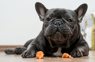 Favorite Fresh Foods for Your Dog