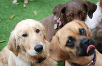 Luna, Lexi and Molly are waiting for the their well deserved treats in the Photo of the Day.
