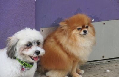 Check out our little princesses, Giselle and Celine posing for the camera!